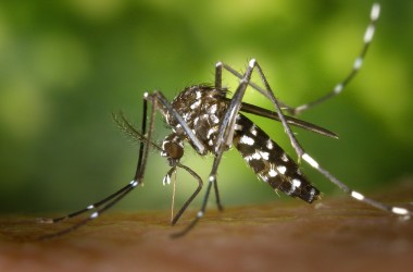 Uwaga na komary!